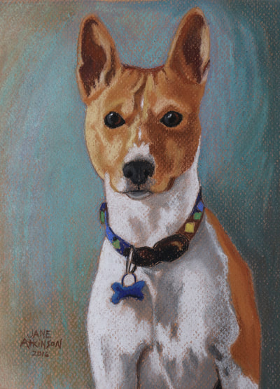 Portrait of a Basinji dog